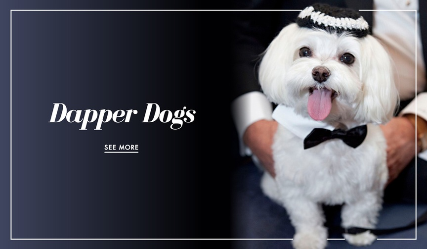 Dog in wedding photos from real weddings