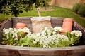 White flowers and terra cotta pots