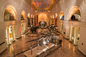 Wedding reception at The Field Museum with dinosaur skeletons and elephant sculptures unique venue