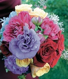 Purple, pink, red, yellow, and blue flowers