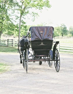 Farm wedding with a vintage black horse drawn carriage