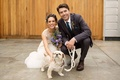 Bride in a line wedding dress groom in suit with white small tog white leash wedding pet in ceremony