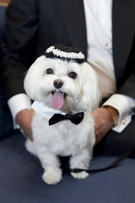 Jewish dog wearing yarmulke and bow tie