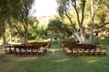 outdoor wedding ceremony at hummingbird nest ranch, olive trees