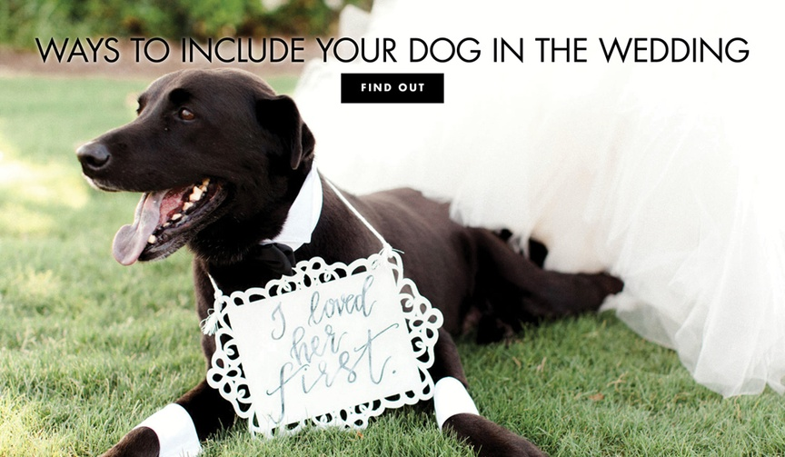 Discover ways to include your dog in the wedding – even if pets aren't allowed at the ceremony or re