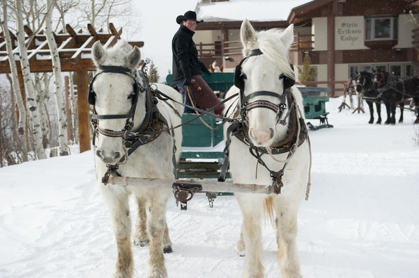 White Clydesdale horses pulling green carriage