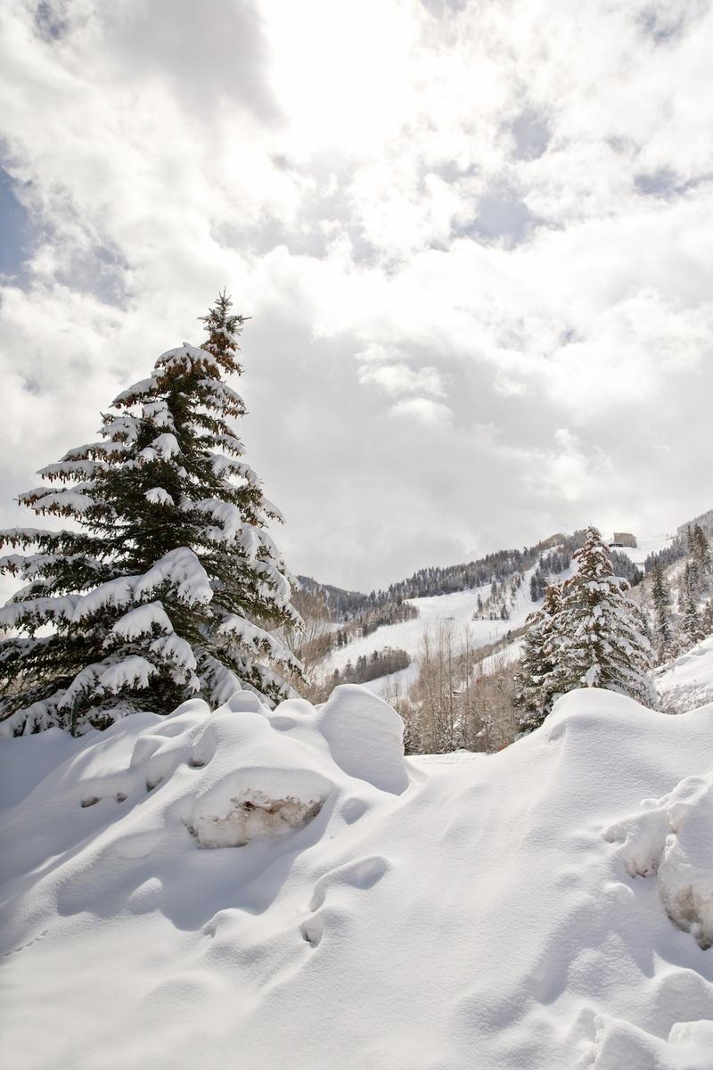 Snowy evergreen and ski slopes in Aspen, Colorado