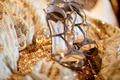 Bride's golden Jimmy Choo heels