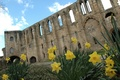 Scotland castle with yellow daffodils in foreground