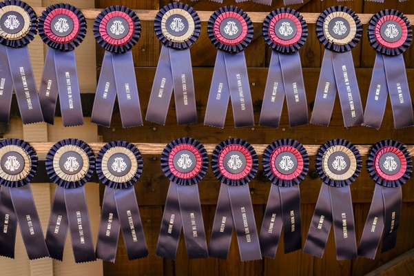 Blue and pink horse show ribbon seating card alternative