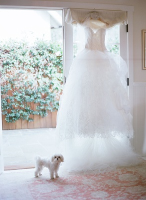 Strapless Vera Wang wedding dress with lace skirt on hanger and dog flower girl