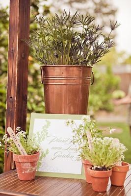 Terra cotta pots hold plants