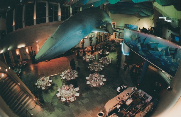 Reception tables beneath giant blue whale replica
