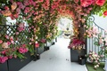 Guests entered the rooftop ceremony area through a tunnel of pink and white rose flowers