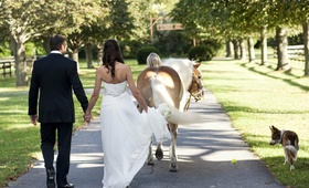 Bride and groom holding hands next to horse