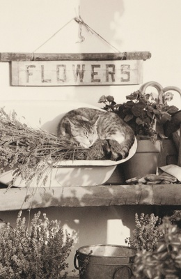 Black and white image of kitten on flower stand