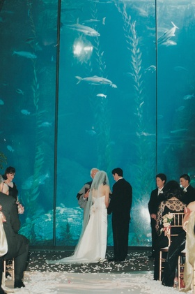 Bride and groom get married in front of large aquarium