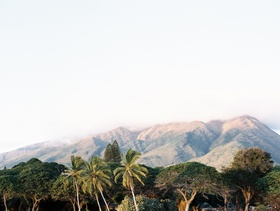 maui wedding, maui scenery at destination wedding, palm trees and mountains in maui