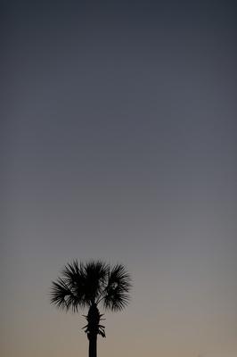 Sea Island, Georgia palm tree and sunset