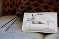 jimmy choo clutch purse white and blue dog reclined on sofa with martini