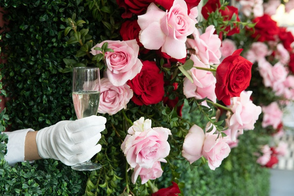 gloved hand reaching out from boxwood and rose wall to serve champagne