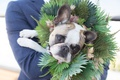 wedding portrait of bride groom dog french bulldog with flower crown halo greenery pink flowers