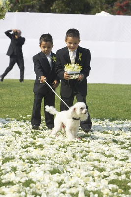 Little boys in suits and white poodle in grass