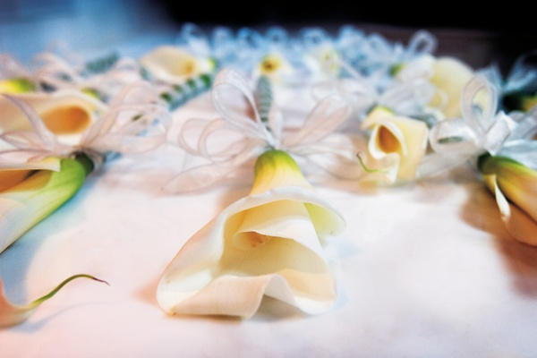 single calla lilies tied with a white ribbon