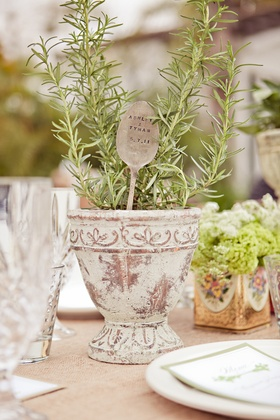 Rosemary herb centerpiece in pot
