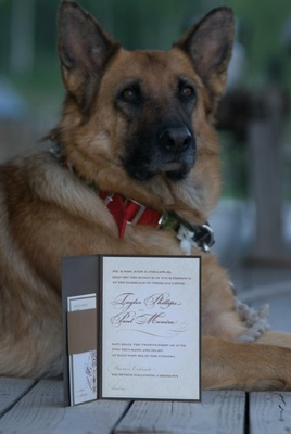 German Shepherd dog with wedding invitation