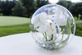 White tulips inside glass globe orb decoration at wedding