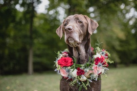 wedding ideas chocolate lab with flower wreath red pink flowers greenery thistle