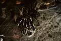 wedding engagement ring and band with spider skeleton hand cobweb halloween wedding ideas