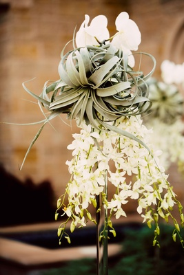 air plant with white dendrobium and phalaenopsis orchids