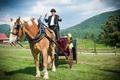 Bride arrives to outdoor ceremony on horse carriage