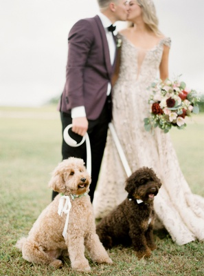 kike hernandez and mariana vicente with dogs arizona red mini goldendoodle bruce mini aussie doodle