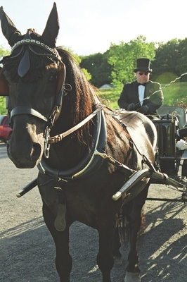 Dark brown horse and carriage driver