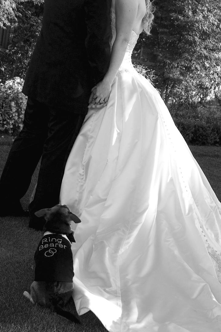 Black and white photo of small dog ring bearer