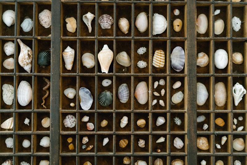 Favors & Gifts Photos - Seashells in Box at Destination