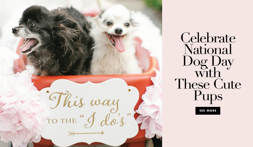 Celebrate National Dog Day with these cute pups at their parents' weddings.