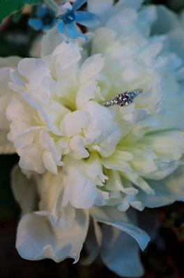 Engagement ring on top of white flowers
