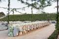 Vine canopy and hydrangea table runner at winery wedding