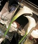 Unique centerpieces at reception tables