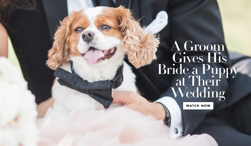 Wedding gift from groom to bride a surprise puppy at the reception watch wedding video with surprise