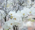 Icy winter-themed wedding centerpieces and orchids