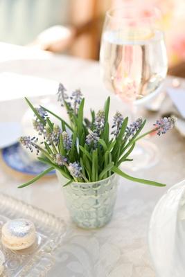 Fresh lavender plant in vase