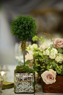 Square vase filled with moss and small treelike plant
