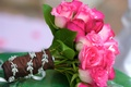 hot pink roses and green leaves tied with brown ribbon