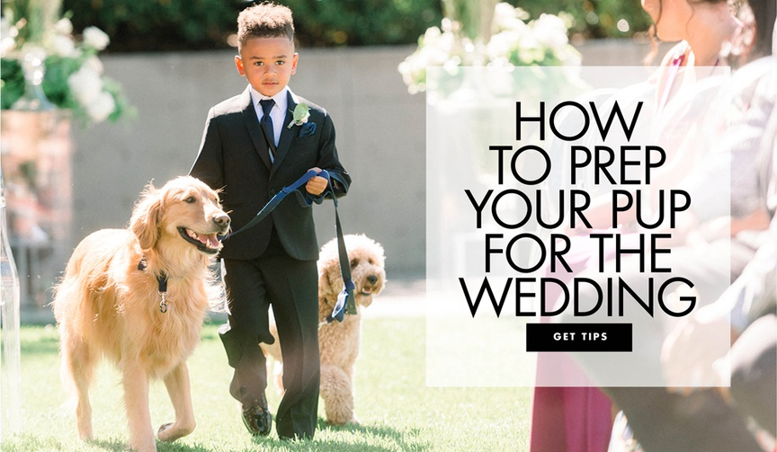 how to prep your dog for the wedding training your dog for the ceremony