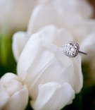 Cushion cut diamond with halo and pave setting on white tulip
